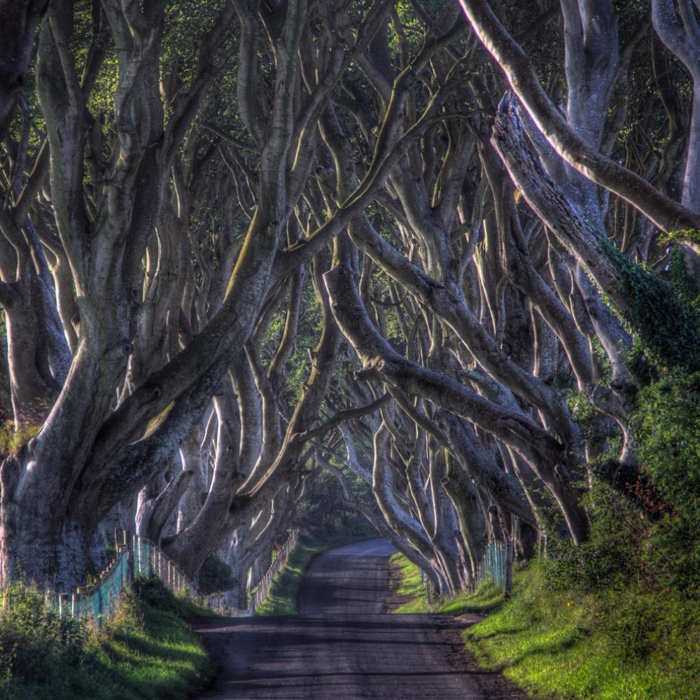 Темная аллея, Ирландия