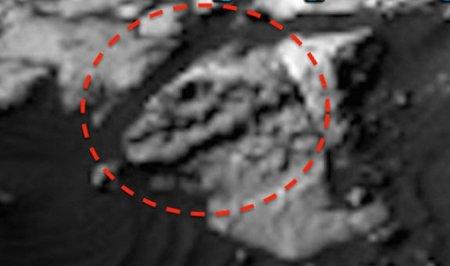 обнаружен череп тираннозавра