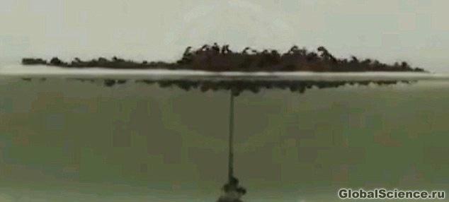 муравьи во время потопа
