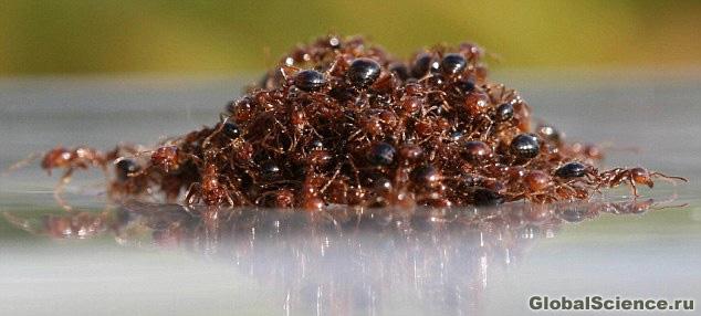 муравейник на воде