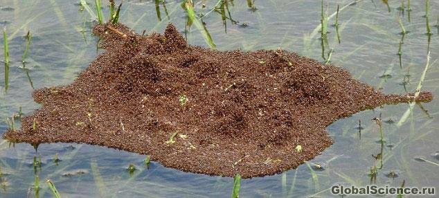 потоп в муравейнике