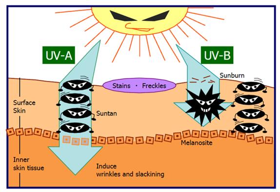 UV и HEV излучение