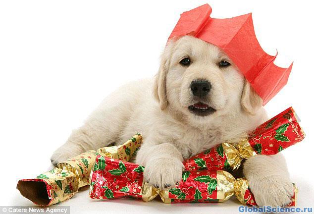 Рождественская собачка