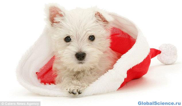 Рождественская собака