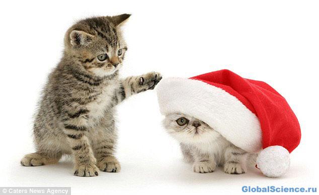 Рождественские кошечки