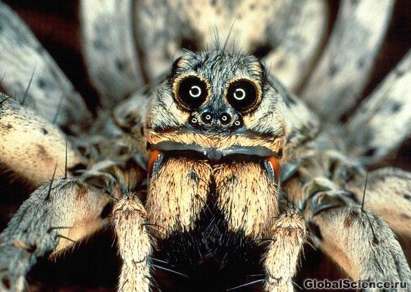 фото тарантула