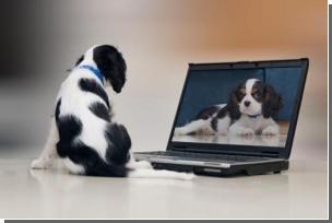 Собаки не хуже людей умеют сортировать фотографии по категориям