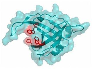 Обнаружен еще один протеин, умеющий восстанавливать ДНК