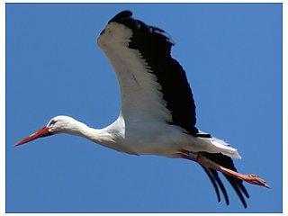 Миграция птиц влияет на размер их мозга