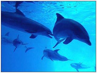 Биологи установили: дельфины используют дипломатию в общении