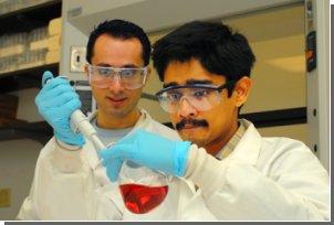 Новый метод поможет обнаружить бактериальную инфекцию за считанные часы