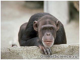 30 причин, почему человек не мог произойти от обезьяны