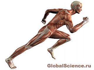 Долгосрочное использование Ботокса ослабляет и атрофирует мышцы тела