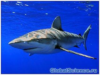 Атака акул на туристов в Египте продолжается