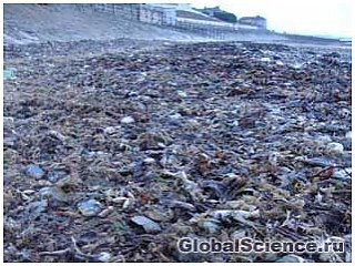 Загадка: тысячи мертвых крабов покрыли берега Англии