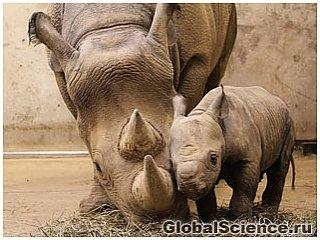 Необычный носорог родился в одном из зоопарков США
