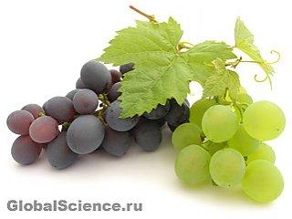 Виноград поможет при заболеваниях печени
