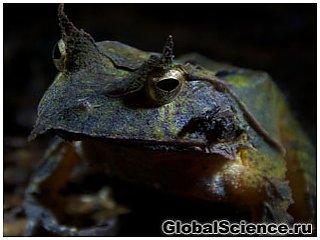 Загадкові тварини Соломонових Островів