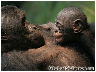 Людям есть чему поучиться у миролюбивых бонобо
