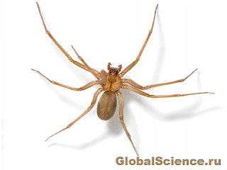 Изменение климата может увеличить количество ядовитых пауков