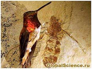 Ископаемое гигантского муравья раскрывает новые сведения