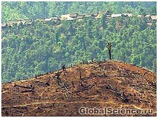 В Бразилии уничтожение Амазонских лесов достигло критического момента