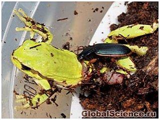 Невероятно, но факт: насекомые атакуют и убивают земноводных животных