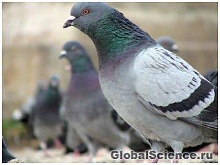 Интеллект и сознание животных  19531_1713