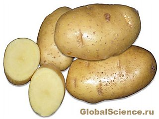 Впервые расшифрован геном картофеля