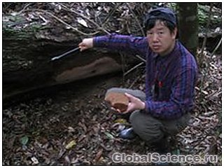 В Китае обнаружен самый крупный гриб в мире
