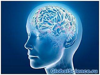 Ученые: определенные виды пробиотиков влияют на функционирование мозга