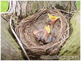 У наших пернатых друзей далеко не птичий ум при построении гнезд