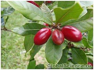 """Ученые открывают секреты """"чудо-ягоды"""""""