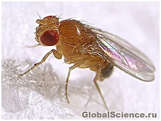 Исследователи обнаружили афродизиак плодовой мушки