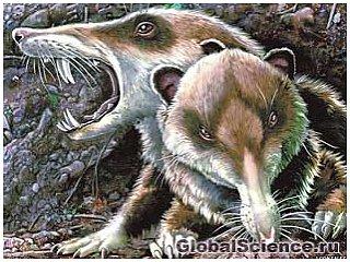 Обнаружено ископаемое маленького, но очень зубастого млекопитающего