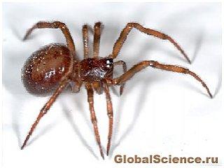 Мозг небольших пауков расположен по всему телу
