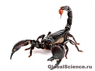 Скорпионы видят телом
