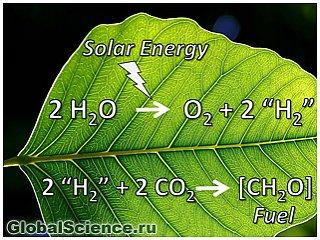 Искусственные листья могут стать новым источником энергии