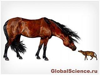 Розмір древніх коней був пов'язаний з кліматом