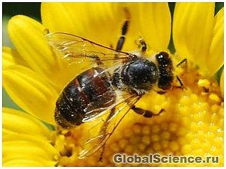 Почему продолжают исчезать пчелы?