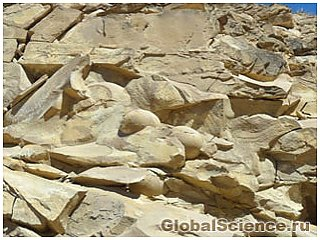 В Чечне нашли 40 окаменелых яиц динозавров