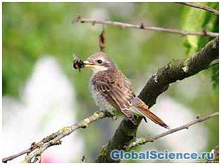 Птицы способствовали уменьшению гигантских древних насекомых
