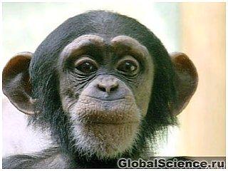 Речь человека развилась из чмоканья обезьян