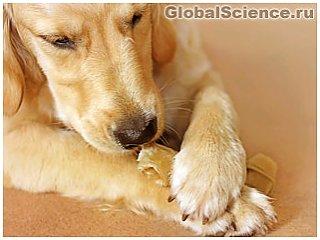 Биологи выяснили, почему собаки любят грызть кости?
