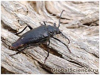 Девонський жук - найдавніше комаху планети