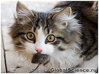 У кошек обнаружили тайную жизнь