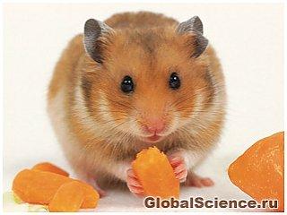 У мишей є зорова система сигналізації про небезпеку