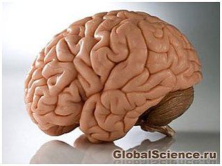 Человеческий мозг и секс