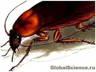 В Бельгии обнаружены останки самого древнего таракана на Земле