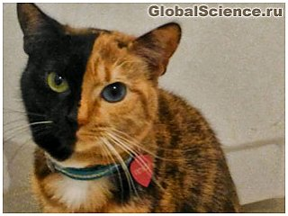 Коты тоже могут быть двуличными
